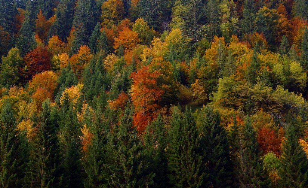 bosco, autunno sulle Dolomiti